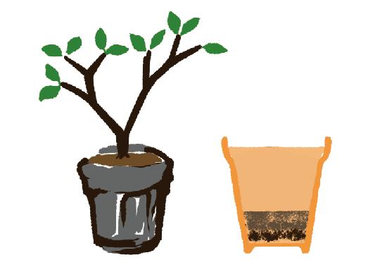 ブルーベリー栽培セット植え方の絵