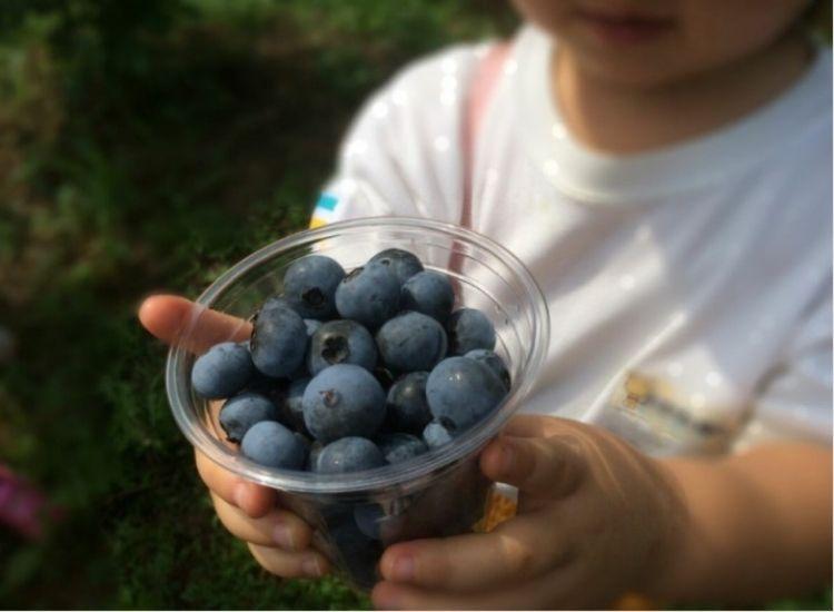 大粒の丹波産ブルーベリー