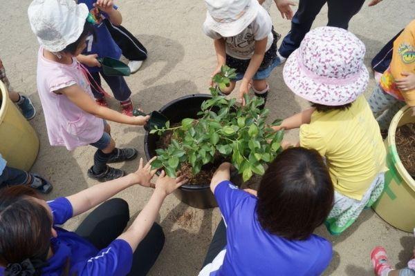 子どもたちと一緒にブルーベリー苗木の植樹体験・わかさ生活の「メノコト元気教室」