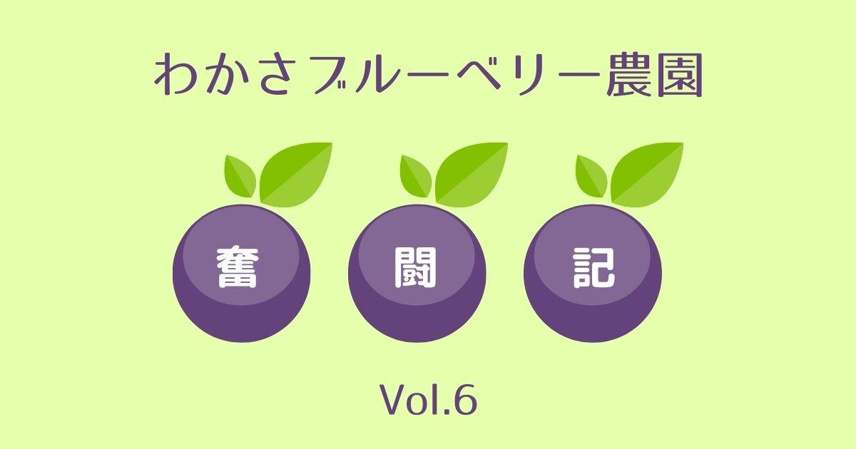 若さブルーベリー農園奮闘記vol.6