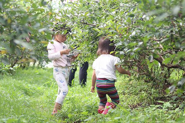 奥丹波ブルーベリー農場でブルーベリー狩りをする子どもたち
