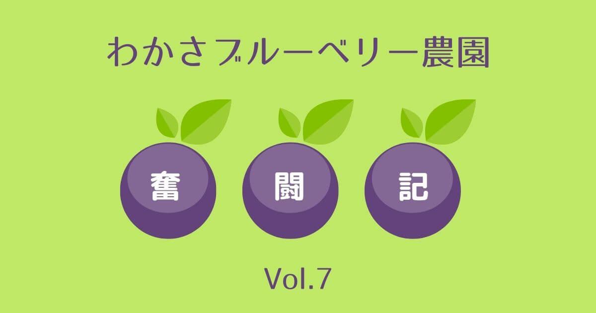 わかさブルーベリー農園奮闘記7